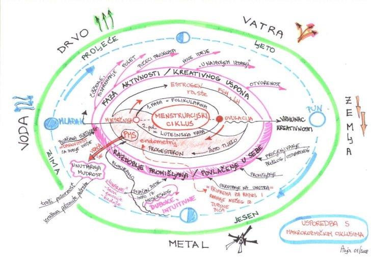 menstruacijski ciklus