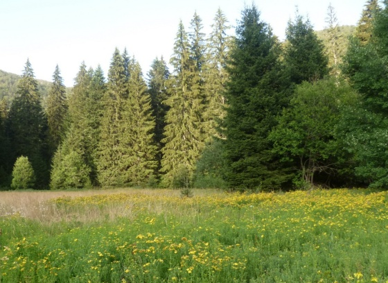 velebitska šuma ljeti