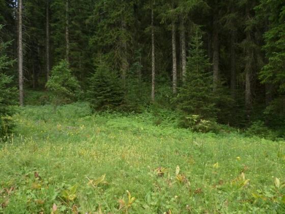 velebit šuma ljeti