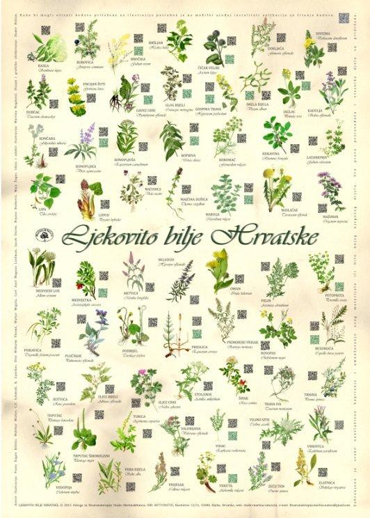 Livadi biljke na 20 ljekovitih