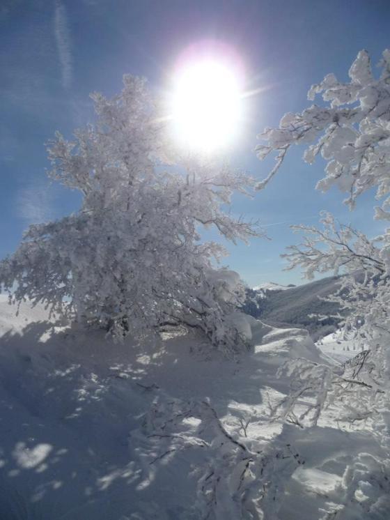 velbit zimi
